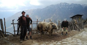 nepal-yak-lo-res